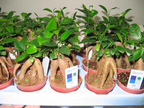 Семена комнатных и экзотических растений купить почтой в 74